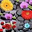 Kwiaty na kamieniach bazaltowych