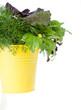Fresh Greens in the Yellow Bucket