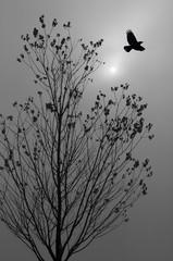 Rabe im Flug vor herbstlichem Baum im Nebel mit Sonne