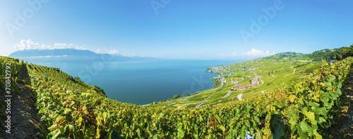 Foto op Canvas Alpen Lavaux Panorama
