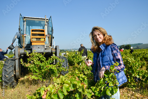 Papiers peints Vin cheerful young woman harvesting grapes in vineyard