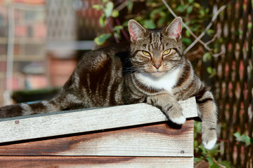 Tabby cat laying on shed roof