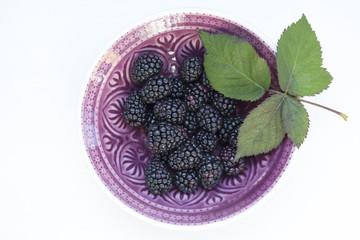 Schüssel Brombeeren (Rubus sectio Rubus) auf weißem Hintergrund