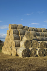 Stacks of round bales of straw in a field, after harvest.