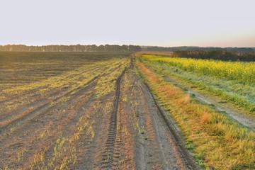 Рассвет в осеннем поле