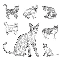 Engraving style hatch vector lineart illustration breeds of cats