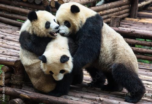 In de dag Panda Panda