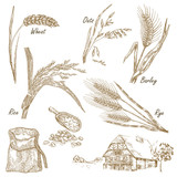 Cereals set. Hand drawn illustration wheat, rye, oats, barley