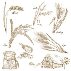 Cereals set. Hand drawn illustration wheat, rye, oats, barley