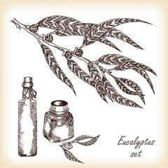 Eucalyptus branch with bottles vector illustration
