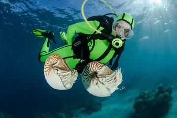 Ozeanien, Palau, Palau nautilusses von Taucher beobachtet, Nautilus belauensis im Pazifik
