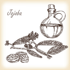 Jojoba branch with glass jar. Hand drawn vector illustration