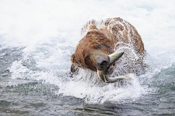 USA, Alaska, Katmai Nationalpark, Braunbär (Ursus arctos) in Brooks Falls mit gefangenem Lachs