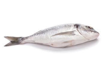Fresh dorado fish