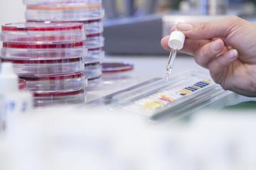 Weibliche Lebensmittelanalytiker arbeiten im Labor