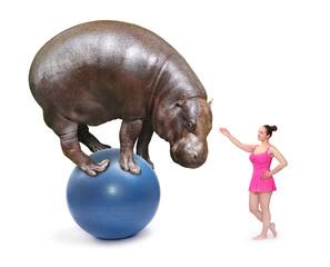 Circus clown girl and Hippo balancing on a blue ball.