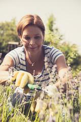Ältere Frau,u Rebschnitt, Lavendel im Garten