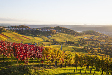 Deutschland, Baden-Württemberg, Stuttgart, Blick über Weinreben nach Rotenberg