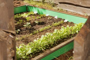 Garten mit Mischgemüse im Beet mit Schneckenzaun