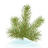 Tannenzweig, Tannengrün, Tanne, Schnee, Winter, Nadelbaum, xmas