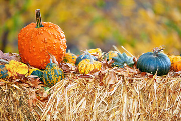 Halloween Pumpkins displaied on hay