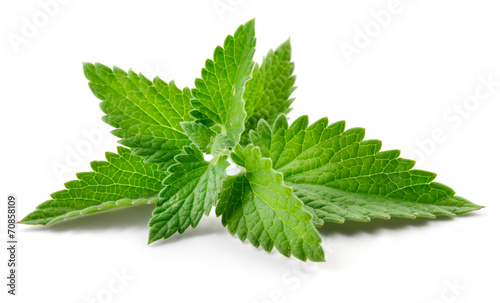 In de dag Kruiden Melissa. Mint isolated on white