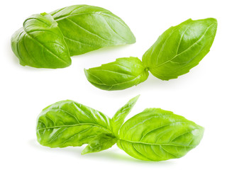 Basil leaves isolated on white. Collection
