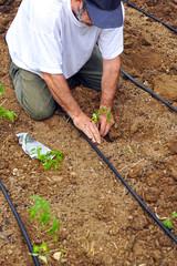 Hortelano sembrando hortalizas en la huerta