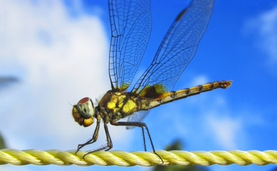 dragonfly-plastic rope-sky- background;