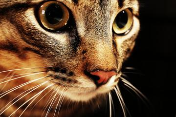 Cat's muzzle closeup