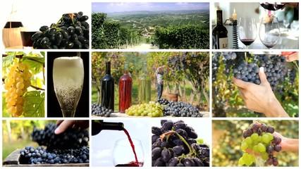 land of wine montage