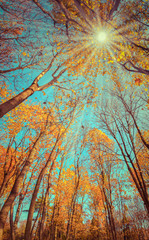 Majestic colorful forest with sunny beams. Natural park. Dramati