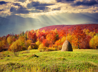 Colorful autumn landscape in the mountains.