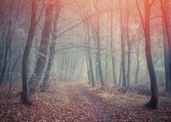 Misty trail in autumn forest.