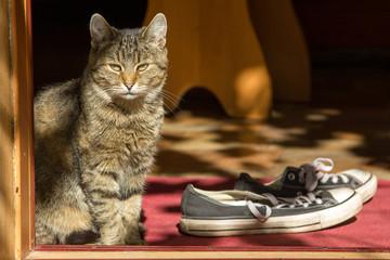 Кошка на пороге у двери