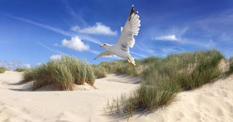 Gull over dunes