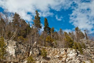 Trees on mountain rocks
