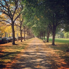 University of Chicago Campus in Fall
