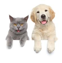 "Постер, картина, фотообои ""Cat and dog over white banner"""