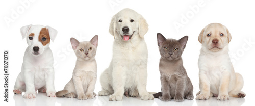 Group of kitten and puppies