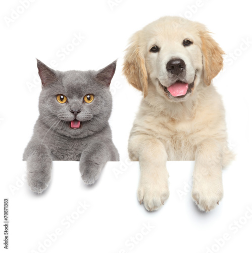 Cat and dog over white banner - 70871383