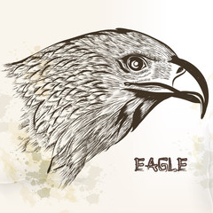 Hand drawn vector eagle