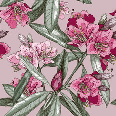 Seamless pattern with Oleander flower