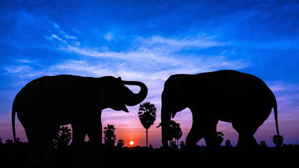 Two elephant on twilight time