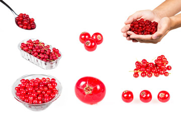 Red currant set isolated