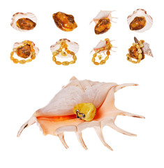 Ring to amber snail Rapana on white background