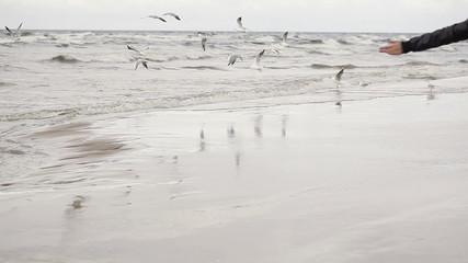 Girl raises gulls