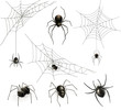 Spiders and spider web, vector set - 70881798