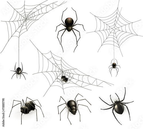 Fototapeta Spiders and spider web, vector set