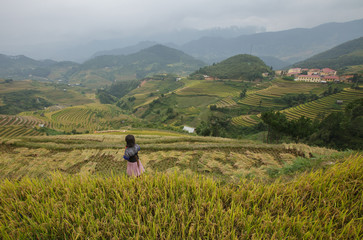 Rice fields in the mountains